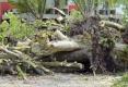 093-2012-EPILOGUE-ECOLOGIQUE-DESTRUCTION-DU-JARDIN-DES-MURS-A-PECHES