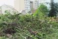 094-2012-EPILOGUE-ECOLOGIQUE-DESTRUCTION-DU-JARDIN-DES-MURS-A-PECHES