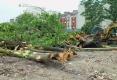 095-2012-EPILOGUE-ECOLOGIQUE-DESTRUCTION-DU-JARDIN-DES-MURS-A-PECHES