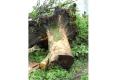 096-2012-EPILOGUE-ECOLOGIQUE-DESTRUCTION-DU-JARDIN-DES-MURS-A-PECHES