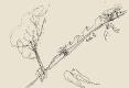 33-beaudouin-pontchateau
